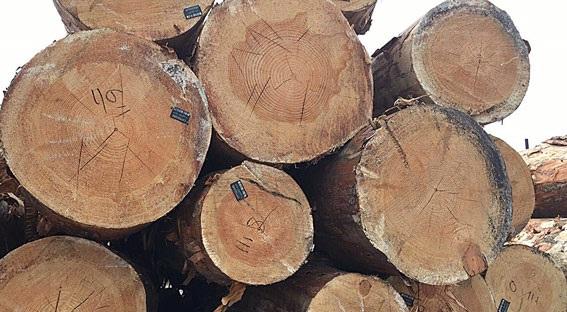 «Всем плевать»: несмотря на требование Зеленского на Харьковщине продолжают незаконно вырубать лес. ВИДЕО