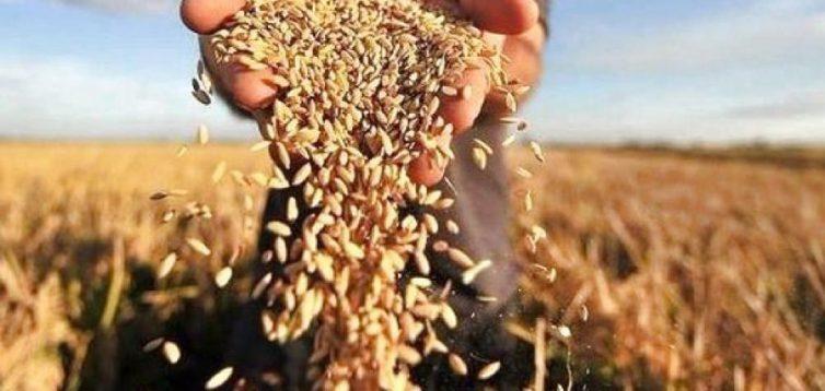 Україна може лишитись без власного зерна через рекордний експорт