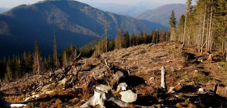 Вирубка лісів Карпат за рік зросла у сім разів: екологи б'ють на сполох. Фото