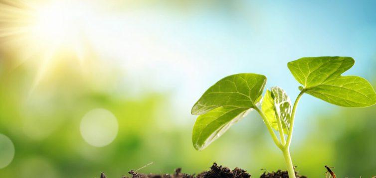 (Рус) Экологическое обслуживание – экспертная помощь профессионалов
