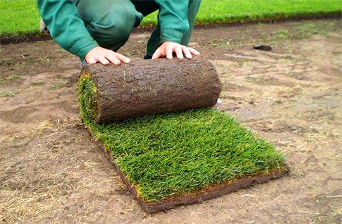 (Рус) Рулонные газоны от компании «STARK»