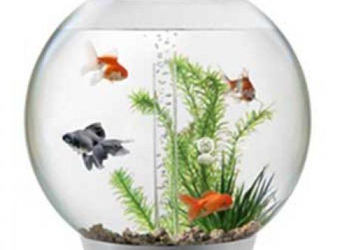 (Рус) Советы по выбору аквариума