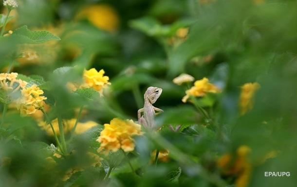 Дослідники відкрили найменшу рептилію на планеті. ФОТО