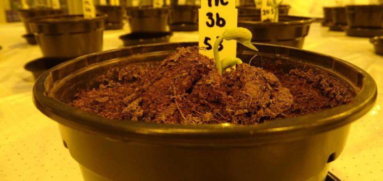 Вчені пояснили, як вирощувати рослини на Марсі