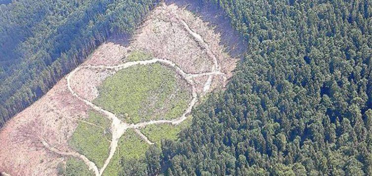 В Україні злочини проти природи відстежуватимуться за допомогою супутників