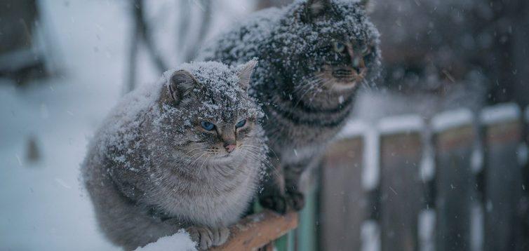 В Україні на вихідні прогнозують потепління