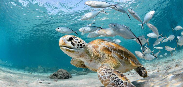 Вчені дослідили, що температура поверхні Світового океану неухильно зростає вже 12 тисяч років