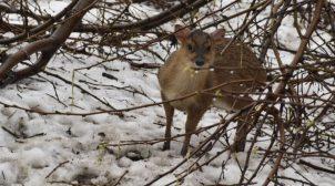 Директор Одесского зоопарка показал, в каких условиях зимуют животные зверинца. Фоторепортаж