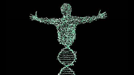 У геномі людини вчені виявили кілька сотень нових генів