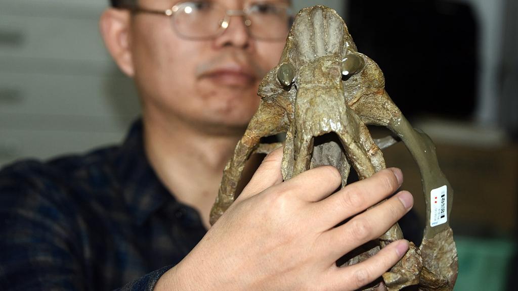 У Китаї знайшли скам'янілу рептилію з двома бивнями
