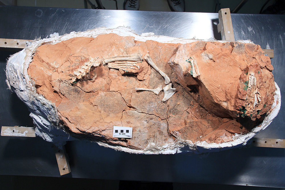 Ученые впервые восстановили мозг динозавра