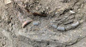 В Ірані археологи знайшли скелет немовляти з незвичайним амулетом