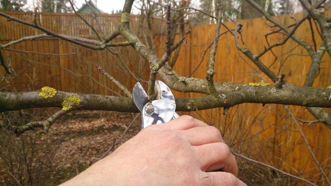 Як замовити обрізку дерев і їх кронування