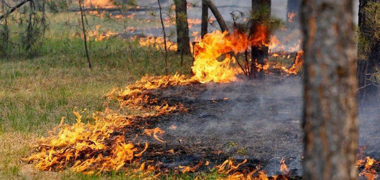 Рятувальники оголосили в Україні найвищий рівень пожежонебезпеки