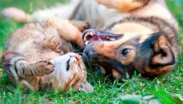 В Україні заборонили бити, знущатися і труїти тварин