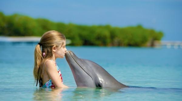 У Херсонській області зграя дельфінів показала відпочиваючим вражаюче шоу