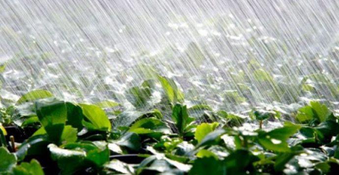На следующей неделе в Украине ожидается жара и грозовые дожди