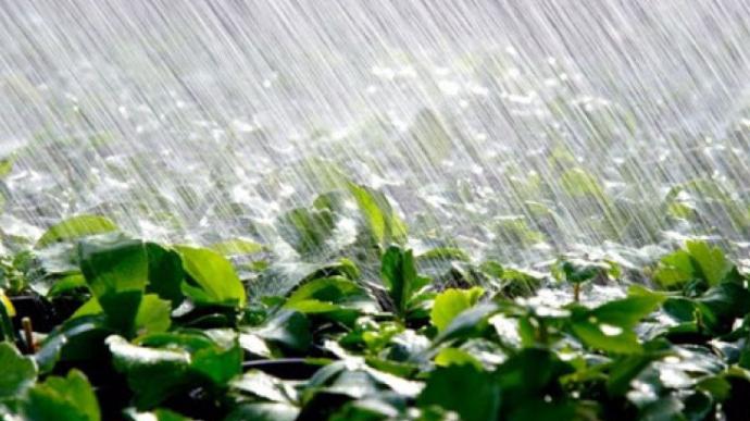 Наступного тижня в Україні очікується спека і грозові дощі