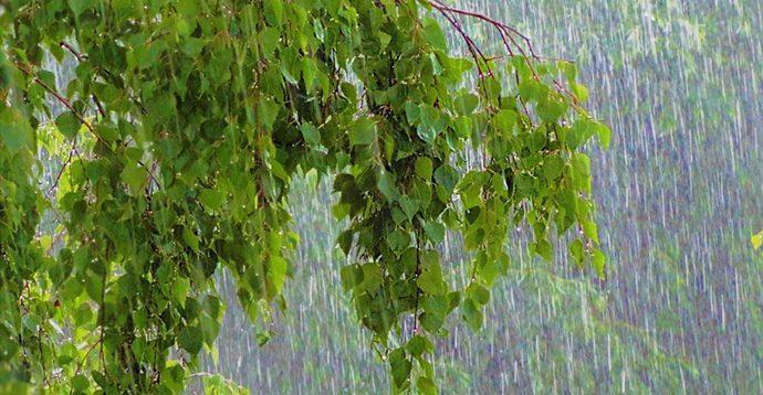 В Україні до кінця тижня протримається дощова погода