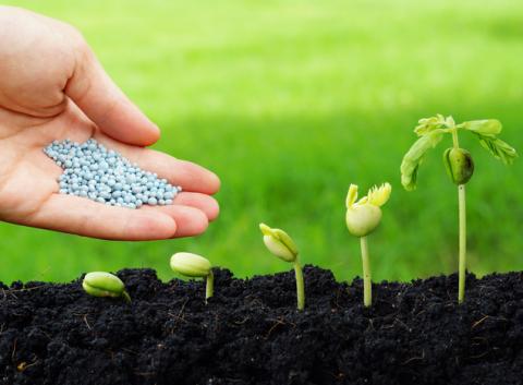 Як вибрати засоби захисту для рослин