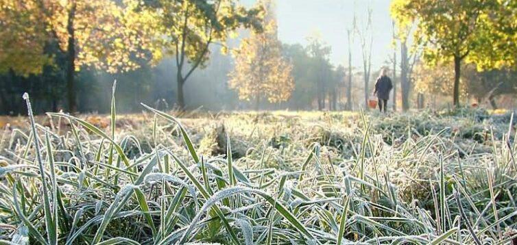 Найближчими днями в Україну прийдуть заморозки