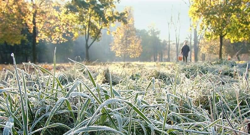 В ближайшие дни в Украину придут заморозки
